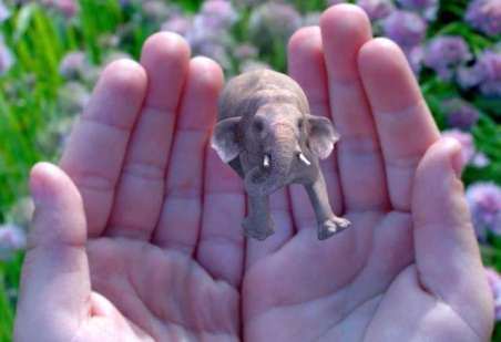 magicleap-elephant