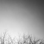 photo d'arbre de tony edison